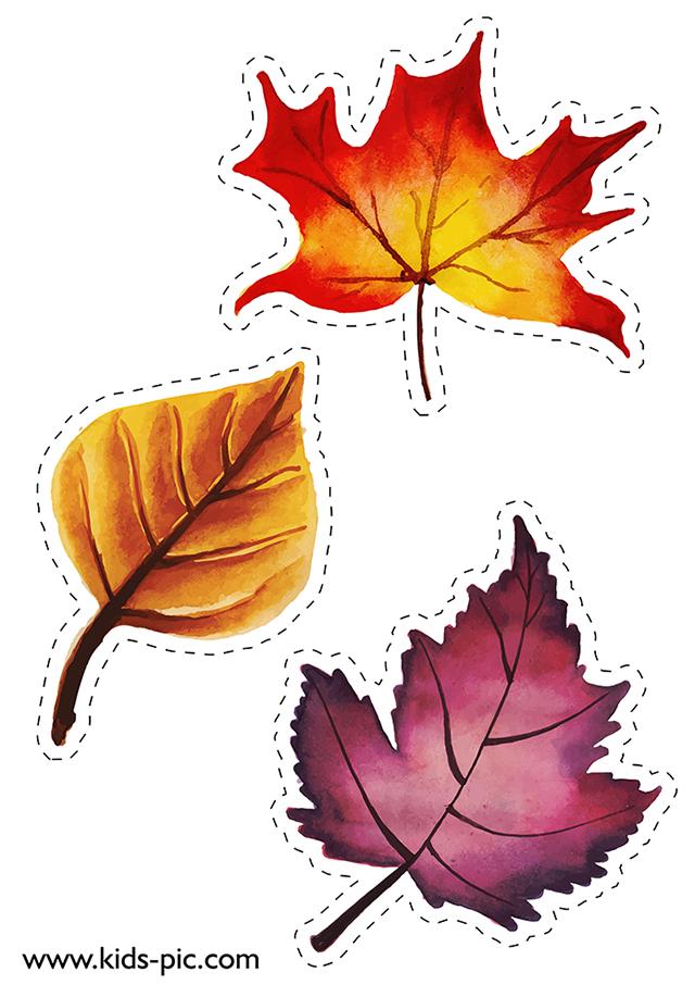 Шаблоны осенних листьев для вырезания   kids-pic. Com.