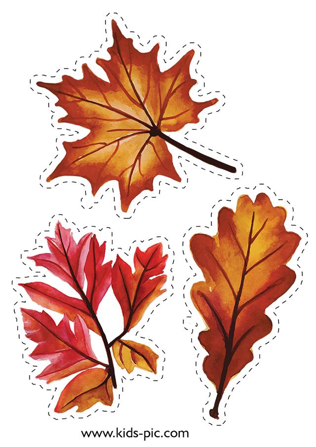 картинки листьев для вырезания распечатать цветные представляет собой доброкачественную