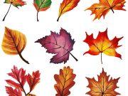 Шаблоны осенних листьев для вырезания из бумаги