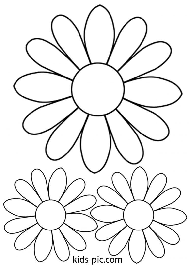 Шаблон для открытки ромашки