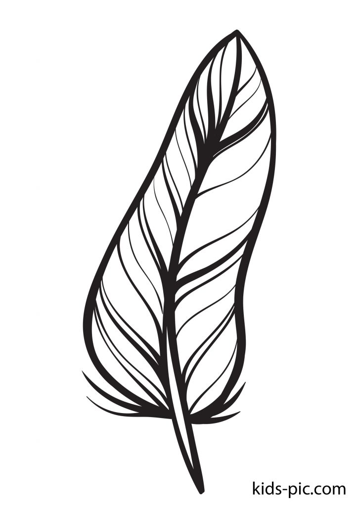 free printable coloring pages of feathers