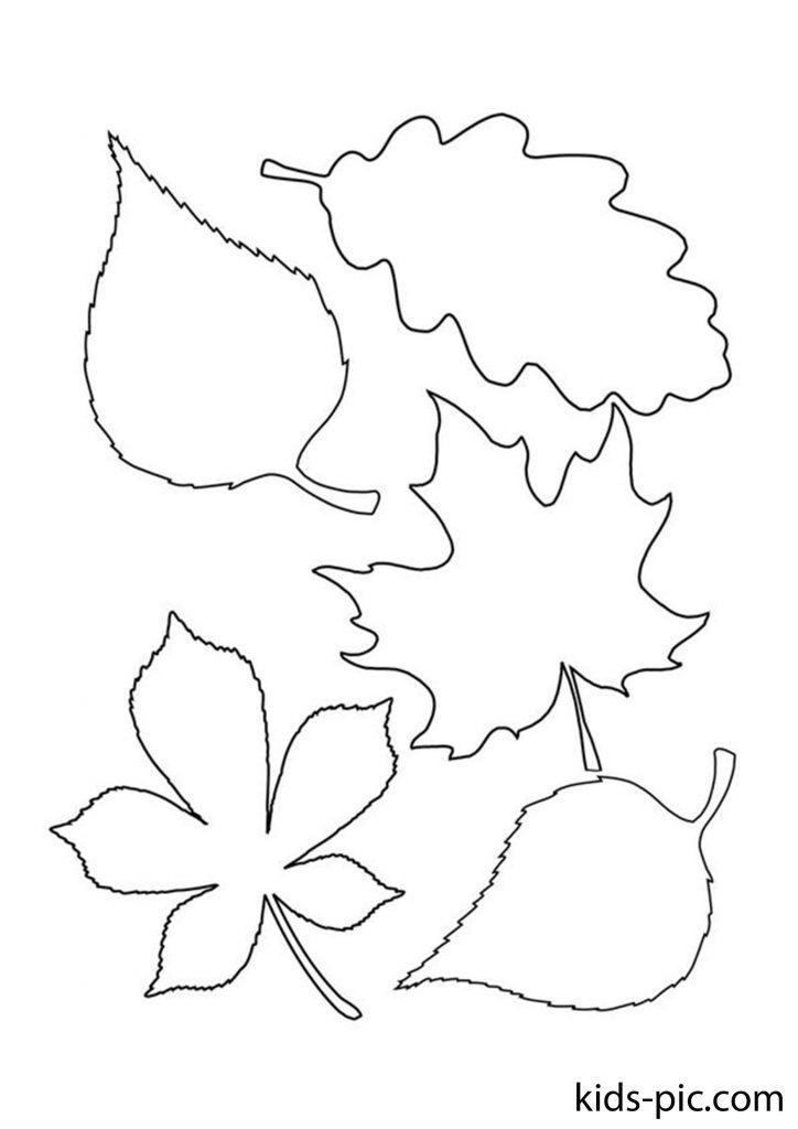 набір осіннього листя для вирізання розфарбування