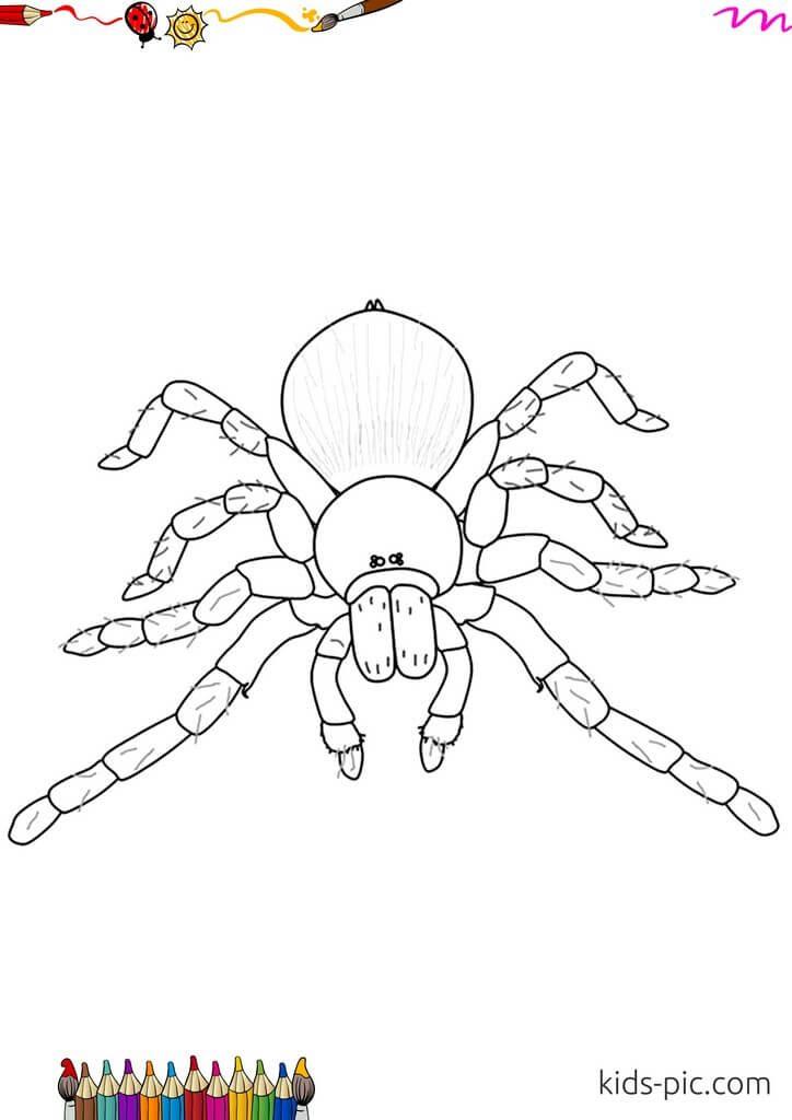 Раскраска паук на Хэллоуин