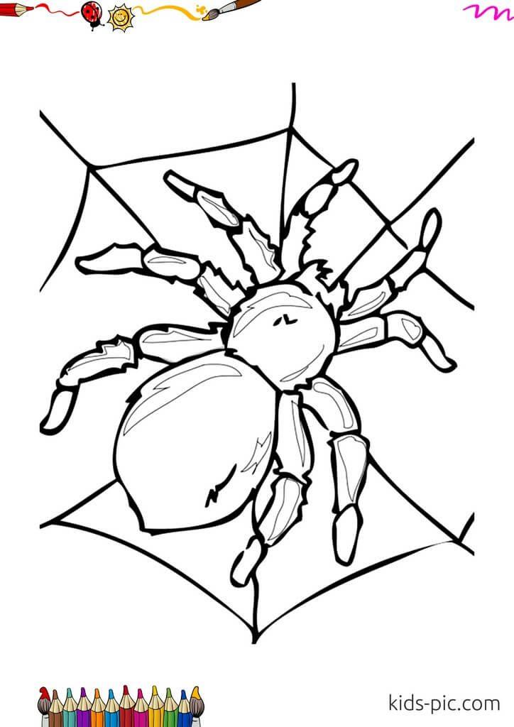 раскраска милый паук