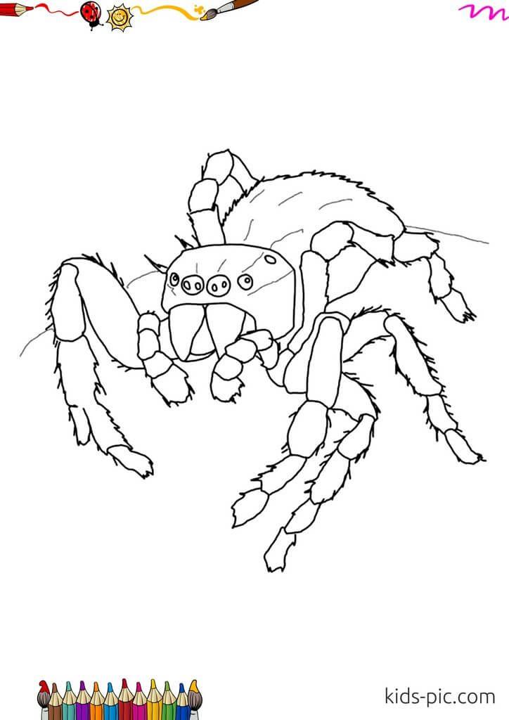 паук рисунок для детей