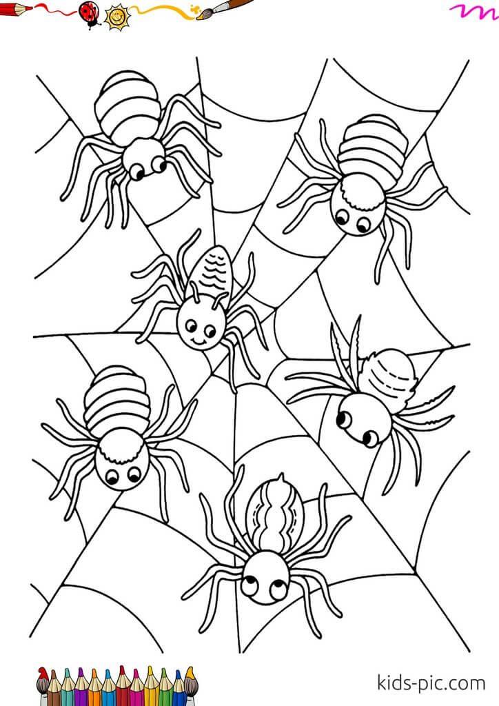 раскраски пауки бесплатно